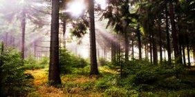 Wald Umwelt Klima Natur